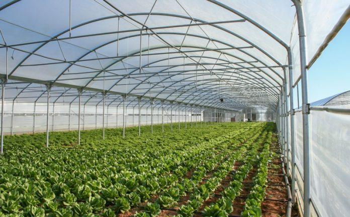 Στέγη στον αναπτυξιακό βρίσκουν αγροτικές επενδύσεις άνω των 500.000 ευρώ