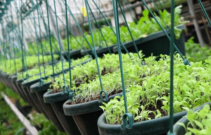 Βασίλης Κόκκαλης: Βούληση του ΥΠΑΑΤ να αποκτήσει η χώρα έναν αξιόπιστο κατάλογο φυτογενετικών πόρων