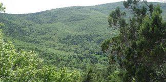 Νέο πρόγραμμα κοινωφελούς εργασίας για την αντιπυρική προστασία των δασών