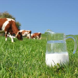 Aπό τον Μάρτιο του 2014, μέχρι τον προηγούμενο Απρίλη, οπότε υπάρχουν δημοσιευμένα στοιχεία από τον ΕΛΓΟ, η μέση τιμή παραγωγού στο αγελαδινό γάλα μειώθηκε κατά 15,95%.