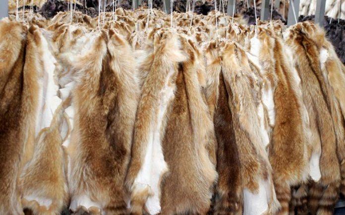 Άνω κάτω κάνουν οι γούνες τους Οικολόγους Πράσινους