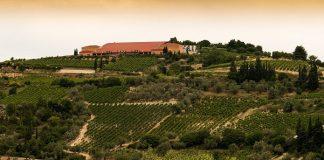 Ανοίγει το βήμα με επενδύσεις σε αμπελώνα και οινοποιείο η Semeli Wines