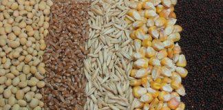 Αυξομειώσεις στην παραγωγή και αγορά ζωοτροφών βλέπει η Rabobank