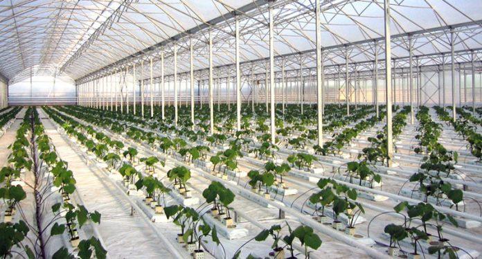 Ολοκληρώθηκε η συγχώνευση των εταιρειών Θερμοκήπια Θράκης και Έλαστρον Αγροτική