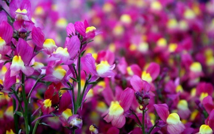 Στο ΦΠΑ 13%, μαζί με σύνθετες ζωοτροφές και σπόρους ηλίανθου, τα κομμένα άνθη