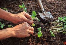 «Νέα Γεωργία για τη Νέα Γενιά»: Δωρεάν προγράμματα ανάπτυξης ανθρώπινου δυναμικού
