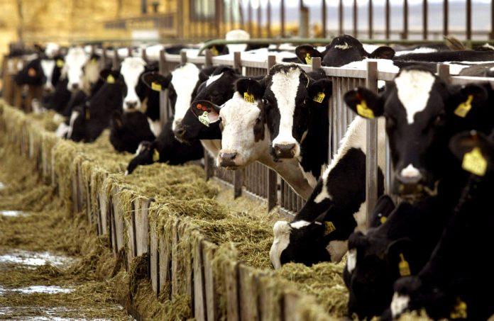 Συνάντηση με τον πρωθυπουργό ζητούν οι αγελαδοτροφοι της ΕΦΧΕ