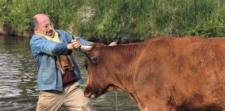 Λεπενού: «Μπέρδεψαν» την αγελάδα με το… βόδι!