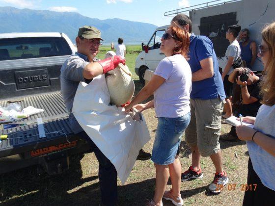 Λίμνη Κερκίνη: 4 πελεκάνοι επανεντάχθηκαν μετά από νοσηλεία τους (ΦΩΤΟ)