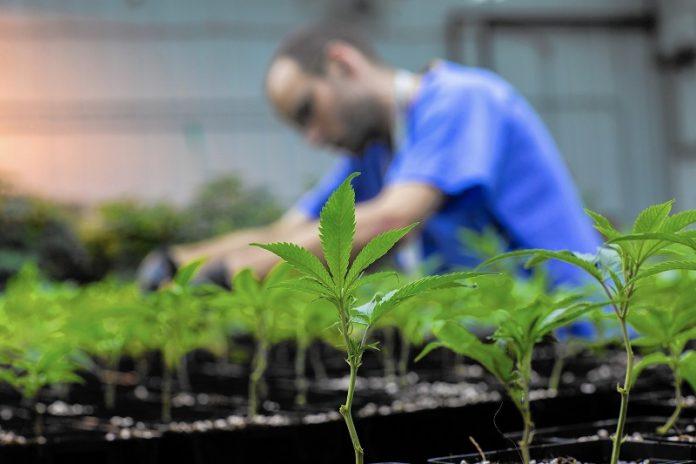 Νομιμοποιείται η καλλιέργεια και διάθεση ιατρικής κάνναβης στην Κύπρο