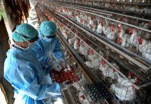 Πρακτικές εκτροφής στις βιολογικές μονάδες πτηνοτροφίας