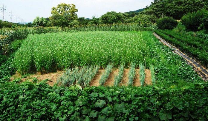 Ελλάδα: Κάτω του ευρωπαϊκού μέσου όρου οι εκμεταλλεύσεις με βιολογικές καλλιέργειες