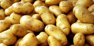 Τηγανητές πατάτες για ρεκόρ... Γκίνες στη Νάξο