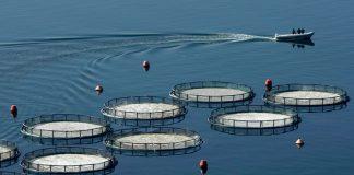 Πήραν υπογραφή οι αποφάσεις για μίσθωση και ίδρυση μονάδων υδατοκαλλιέργειας