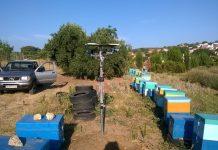 Δυστυχώς, οι κλέφτες μελισσιών στη Ροδόπη, όπως αποδείχτηκε, είναι μελισσοκόμοι σε κάποιες περιπτώσεις.