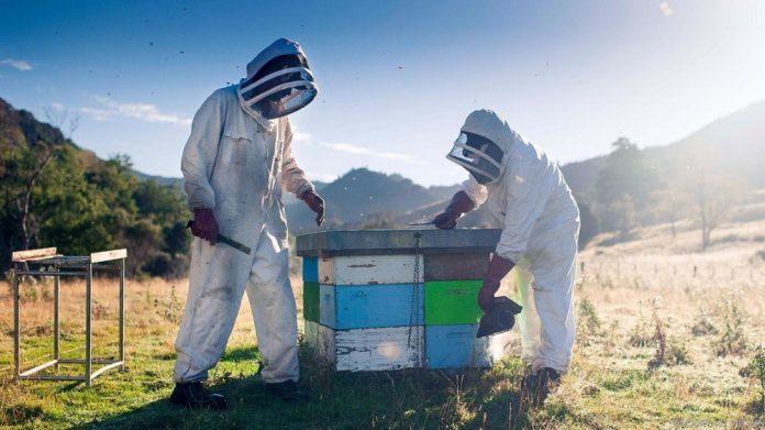 Επιστολή προέδρου Ο.Μ.Σ.Ε στον Αποστόλου για τη μη ένταξη μελισσοκόμων στα σχέδια βελτίωσης