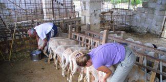 «Κάτω τα χέρια από την κτηνοτροφία» λένε οι αιγοπροβατοτρόφοι της ΑΜΘ