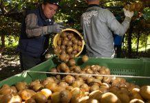 Συναντήσεις Αντώνογλου για την εντατικοποίηση των ελέγχων παράνομης διακίνησης αγροτικών προϊόντων