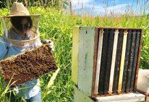 Ενεργοποιούνται οι δράσεις Αντικατάσταση κυψελών & Οικονομική στήριξη της νομαδικής μελισσοκομίας και για το έτος 2019