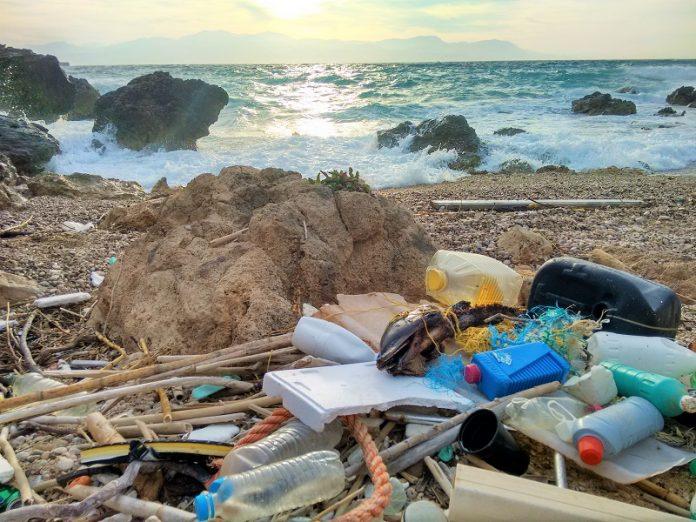 Αρχιπέλαγος: Στα στομάχια δελφινιών καταλήγουν τα πλαστικά απορρίμματα
