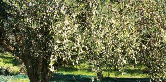Δεν έχει χτυπηθεί από τον καιρό η παραγωγή σε Κρήτη, Λέσβο και Πελοπόννησο