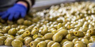 Αρχές Σεπτεμβρίου νέα συνάντηση για την ελιά Χαλκιδικής