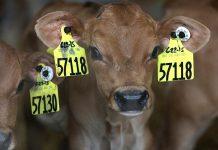 Ελπιδοφόρα η αντικατάσταση των αντιβιοτικών με πρόσθετα ζωοτροφών