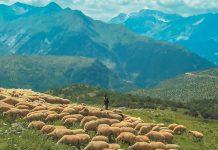 Η βιωσιµότητα της κτηνοτροφίας στις ορεινές περιοχές