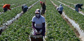 ΗΠΑ: Μειώνεται η παράνομη αγροτική εργασία