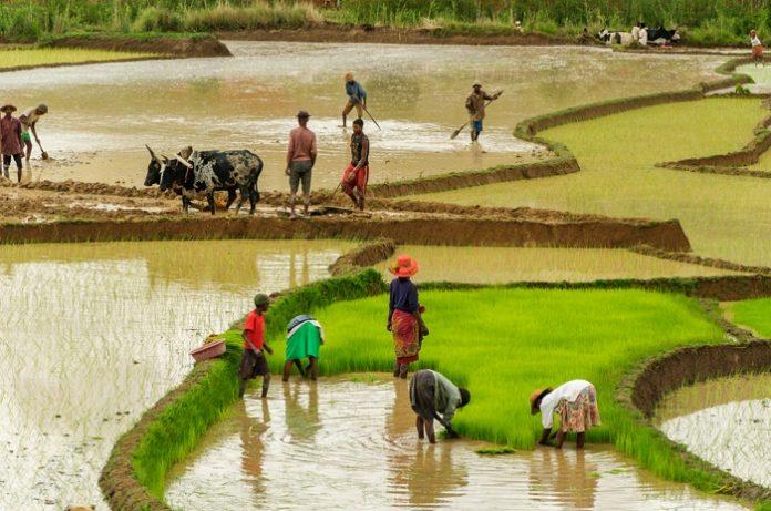 Η αγροτική κρίση της Αφρικής