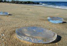 Οι 26 παραλίες στην Ελλάδα που πνίγονται στις Μέδουσες, οι 7 στην Αττική