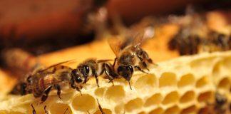 Ομιλία και συνέλευση Μελισσοκόμων την Πέμπτη 14/2 στη Λάρισα