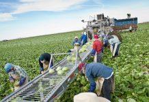 Παρατείνεται η εθνική στρατηγική για τα οπωροκηπευτικά