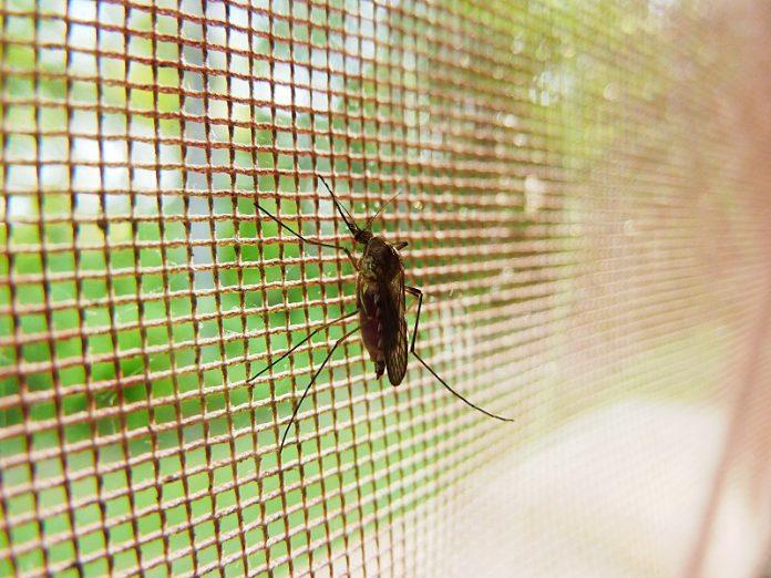 ΠΕ Αττικής: Προληπτικά μέτρα αντιμετώπισης των κουνουπιών