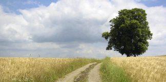 Στη βελτίωση των προσβάσεων σε αγροτικές εκμεταλλεύσεις προχωρά η Περιφέρεια Θεσσαλίας