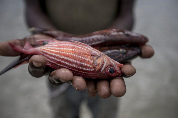 Δωρεάν διάθεση αλιευμάτων σε Αιγάλεω και Πέραμα από τον ΣΑΣΕΛ και το ΥΠΑΑΤ