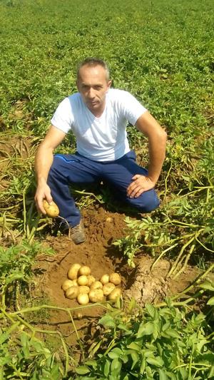 vesmelis-perithorio-patata-kalliergeia