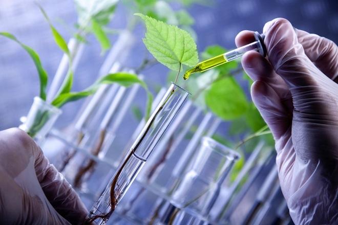 Πάτρα: Συνέδριο για την συμβολή της γενετικής βελτίωσης των φυτών στην αειφόρο γεωργία