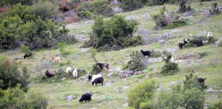 Καίρια ζητήματα της κτηνοτροφίας στο επίκεντρο της συνάντησης Τελιγιορίδου και Αδαμίδη στη Λέσβο