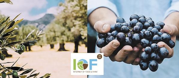 Πρόγραμμα IOF2020: Τεχνολογίες σε επιτραπέζιο σταφύλι και ελιά μειώνουν το κόστος παραγωγής