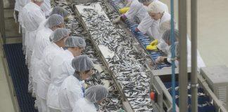 Έγκριση 112 επενδύσεων στις υδατοκαλλιέργειες που θα δημιουργήσουν 164 νέες θέσεις εργασίας