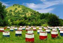 Αίτηση διαχείμασης κυψελών για τους μελισσοκόμους της ΠΕ Λακωνίας