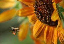 Η νοημοσύνη των φυτών και η ικανότητά τους να επιλύουν προβλήματα b0e42051d62