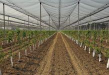 Β. Κόκκαλης: Ξεκινά πρόγραμμα δημιουργίας νέων ποικιλιών φυτικών ειδών ύψους 1,5 εκατ. ευρώ