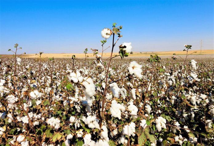 Β. Κόκκαλης: Η χώρα διαθέτει στρατηγικό σχέδιο για την Ελληνική βαμβακοκαλλιέργεια