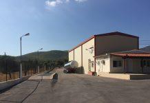 Με 4,60 ευρώ το κιλό αγοράζει το αγουρέλαιο των Αγίων Αποστόλων η Alta Maremma