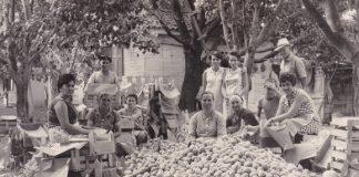 Ο Α.Σ. Ζαγοράς τιμά τη προσφορά των γυναικών – αγροτισσών στη παραγωγή προϊόντων υγιεινής διατροφής.