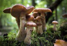 Τα μανιτάρια είναι μύκητες και αποτελούν ένα από τα πέντε βασίλεια και το δεύτερο σε πλήθος ειδών άθροισμα στον πλανήτη μετά από τα έντομα.