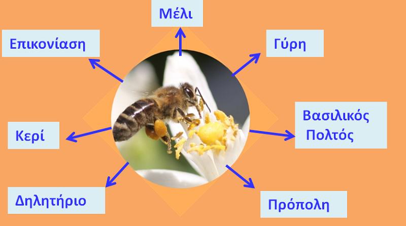 Eκδήλωση στην Κομοτηνή για τα προϊόντα της μέλισσας και την σχέση τους με το Ευ Ζην των ανθρώπων