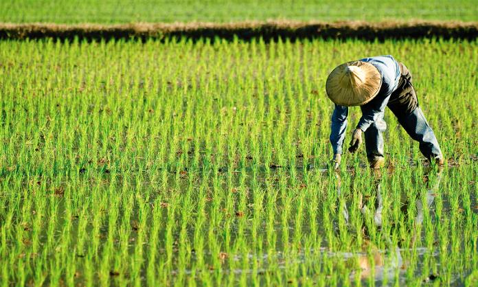 Η γεωργική τεχνολογία πρέπει να βγει από τα εργαστήρια και να τεθεί στην υπηρεσία των αγροτών